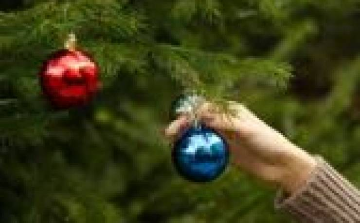 Prepare Your Tree for Pick-up